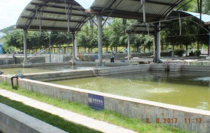 ကျွန်တော်နှင့် စိန (၅)